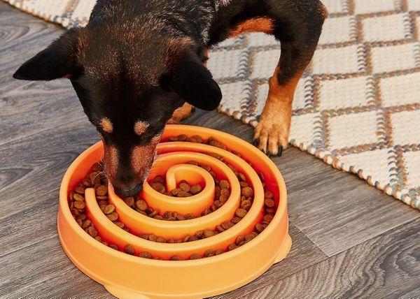 Gamelle interactive pour chiens Fun Feeder Hound