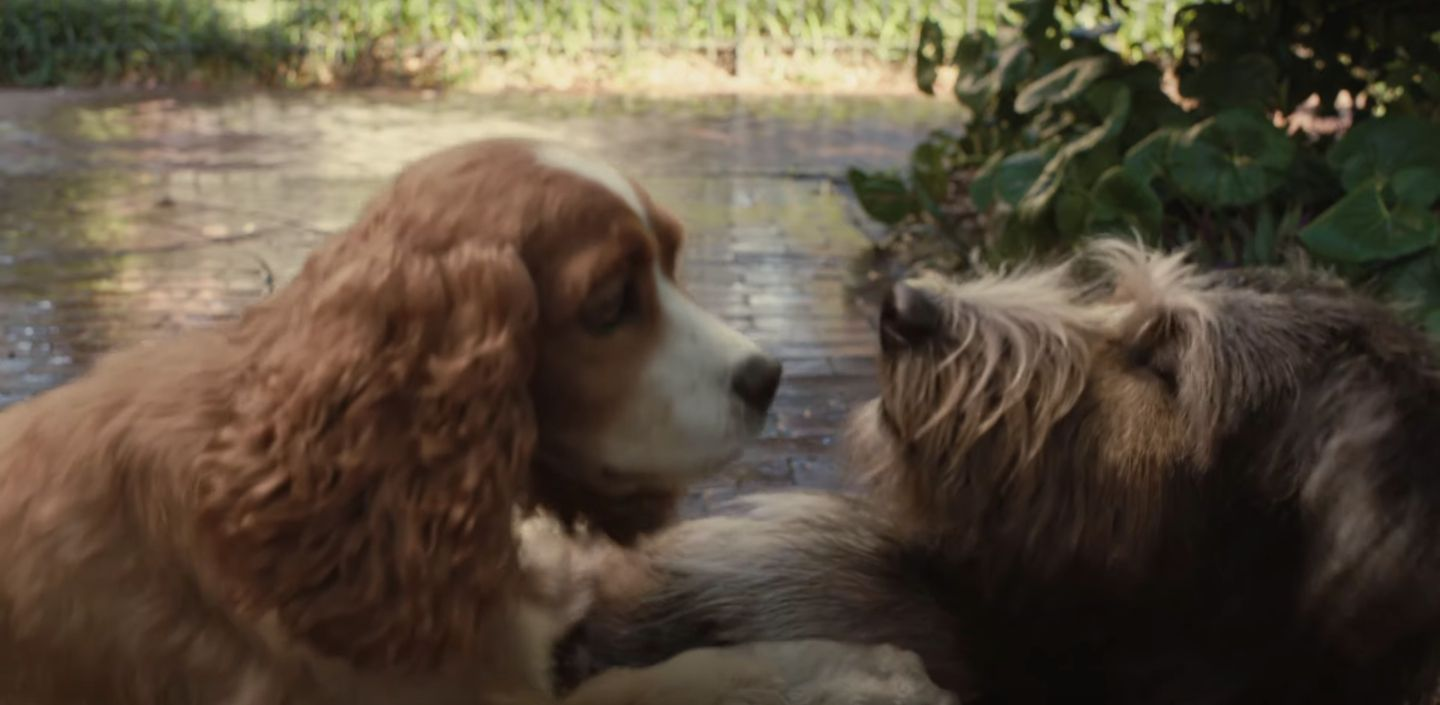 Disney Reveals Live Action Lady And The Tramp Movie Trailer