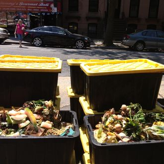 How I Learned to Love Composting
