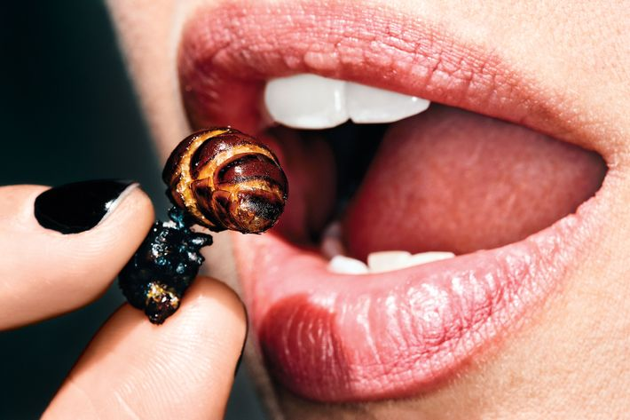 Edible Insects Are The Food Of The Future