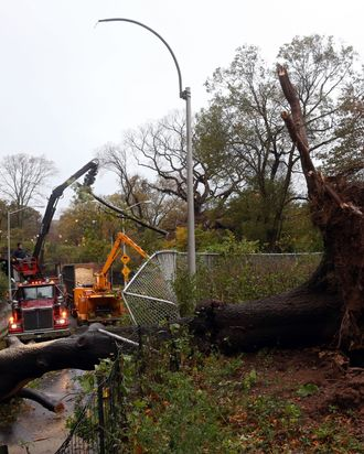 Workers clear a downed tree blocking East 96th street in Central Park the morning after Hurricane Sandy on October 30, 2012 in New York City. The storm has claimed at least 16 lives in the United States, and has caused massive flooding across much of the Atlantic seaboard. US President Barack Obama has declared the situation a 'major disaster' for large areas of the US East Coast including New York City.