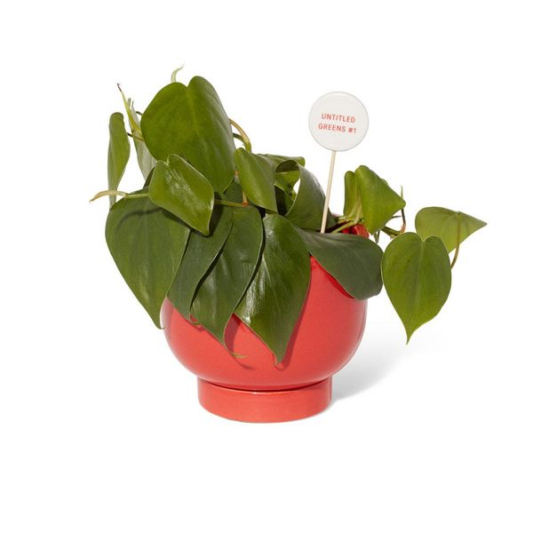 The Sill Met Red Planter