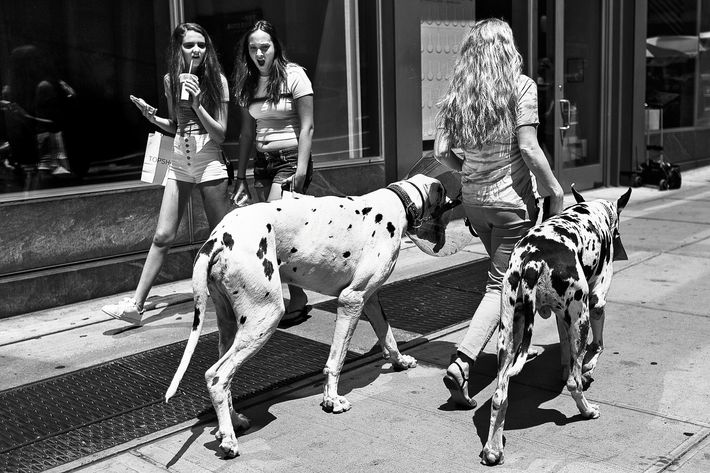 Girls react asd a woman walks her dogs in NYC, June 21, 2016. (Photo/Andres Kudacki)
