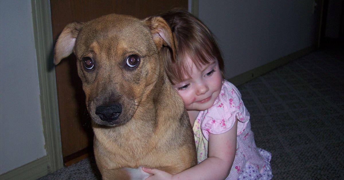 Your Dog Hates Hugs