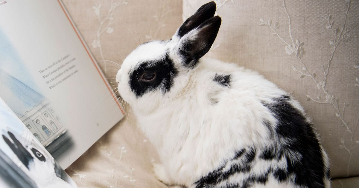 Mike Pence S Bunny Marlon Bundo Made Up To 50 000 Last Year