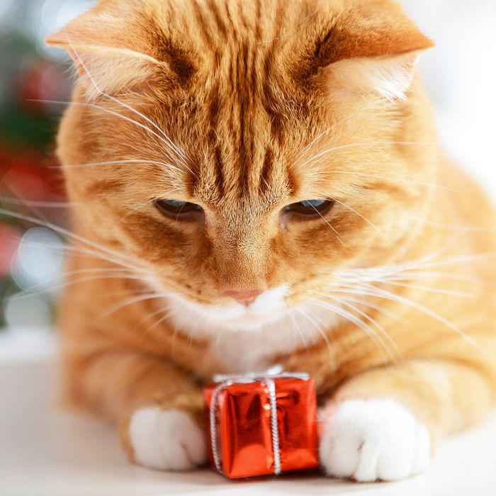 Cat with present.