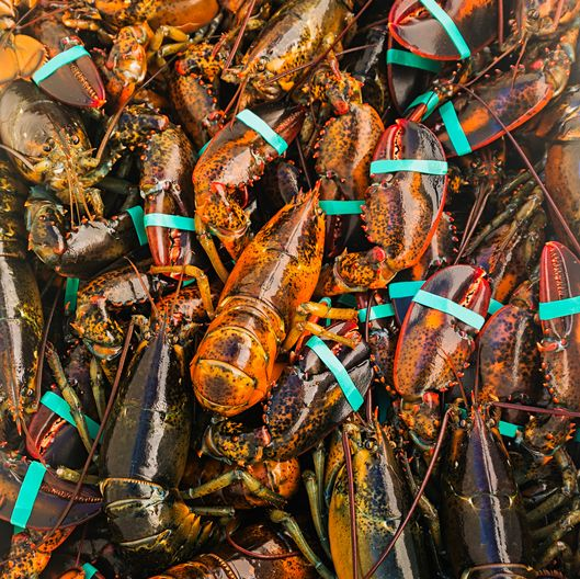 Full frame of fresh lobsters