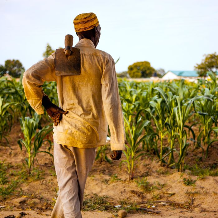 A farmer in the Upper West Region of Ghana looks at his crops.