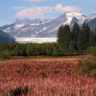Alaska's Mendenhall Glacier across meadow.