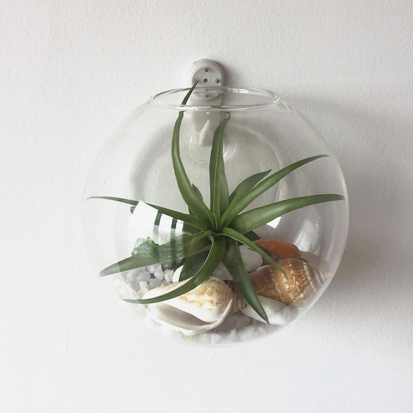 Pack of 6 Glass Planters Wall Hanging Planters