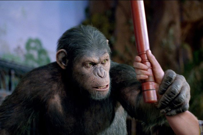 RISE OF THE PLANET OF THE APES  A defiant Caesar takes the first step in what will ultimately lead to the Rise of the Planet of the Apes.  TM and ? 2011 Twentieth Century Fox Film Corporation. ?All rights reserved. ?Not for sale or duplication.