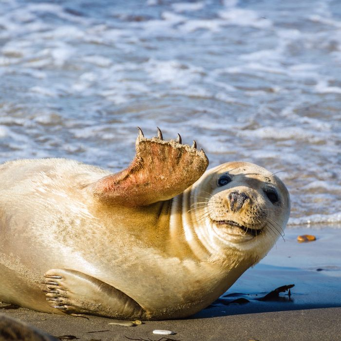 The Finalists For The Comedy Wildlife Photography Awards