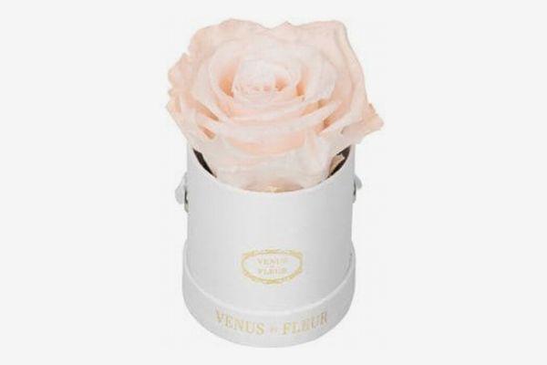 Venus ET Fleur Eternity De Venus Le Mini Round Eternity Rose