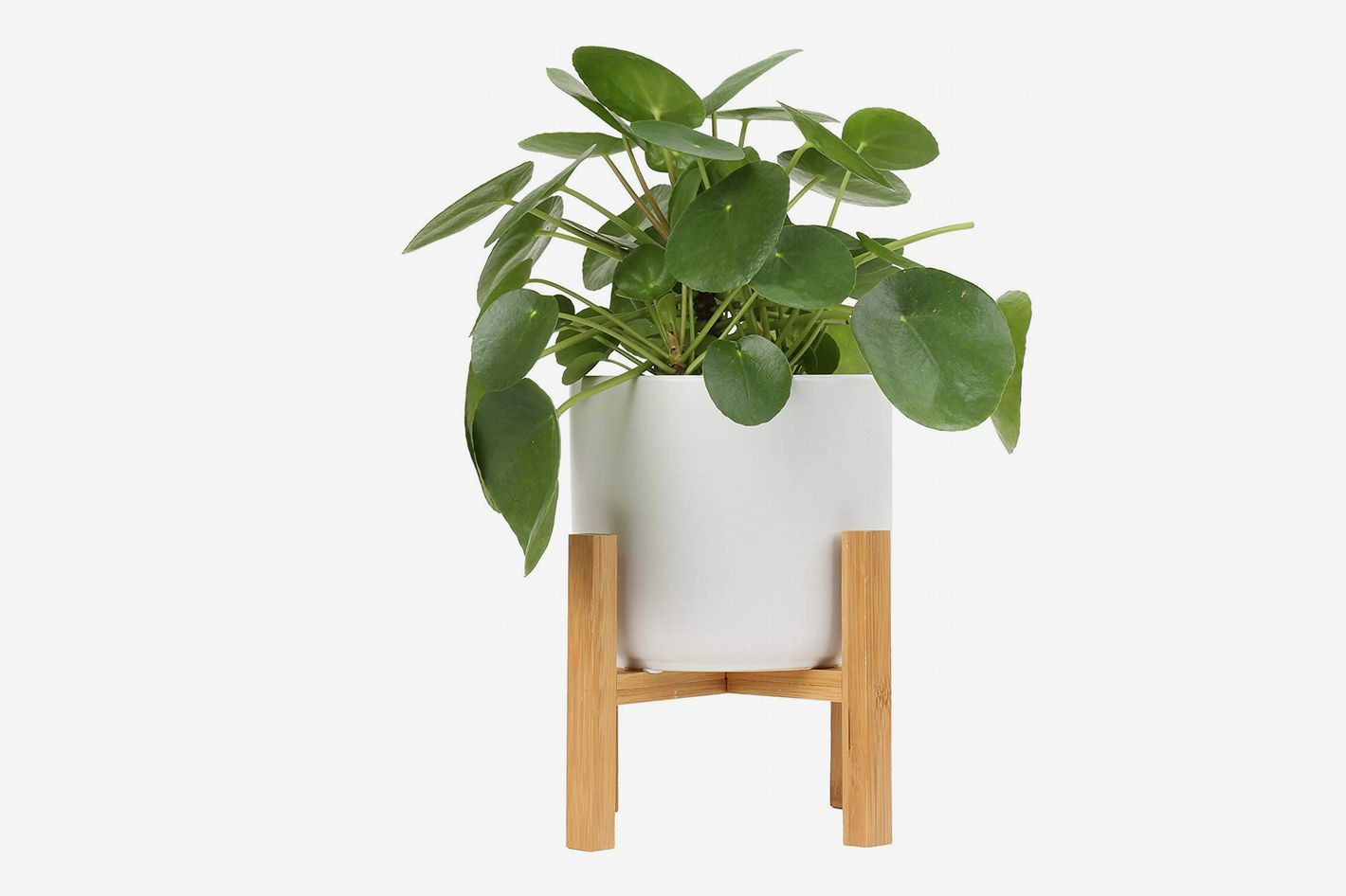 Costa Farms Chinese Money Plant in Mid-Century Planter with Stand