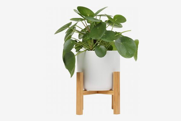 Costa Farms Chinese Money Plant and Plant Stand