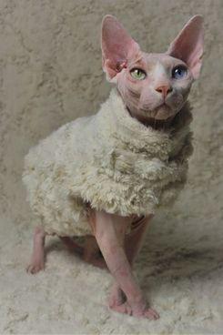 Sphynx Swag Lucifer Sweater