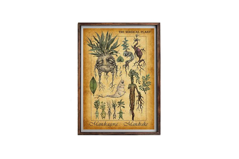 Harry Potter Mandrake Poster