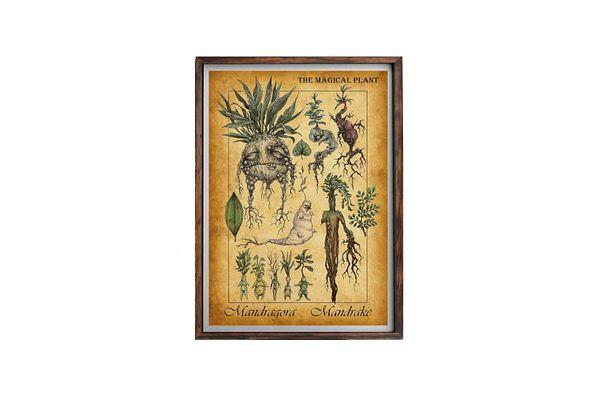 Harry Potter Mandrake Poster