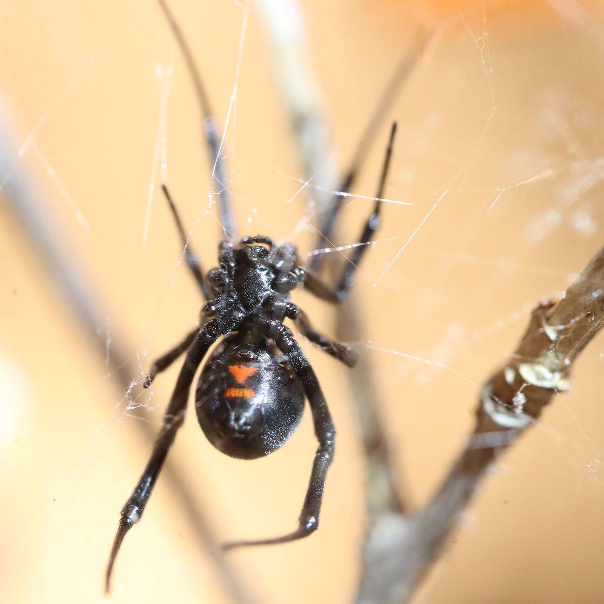James Wan Is Producing an 'Arachnophobia' Remake