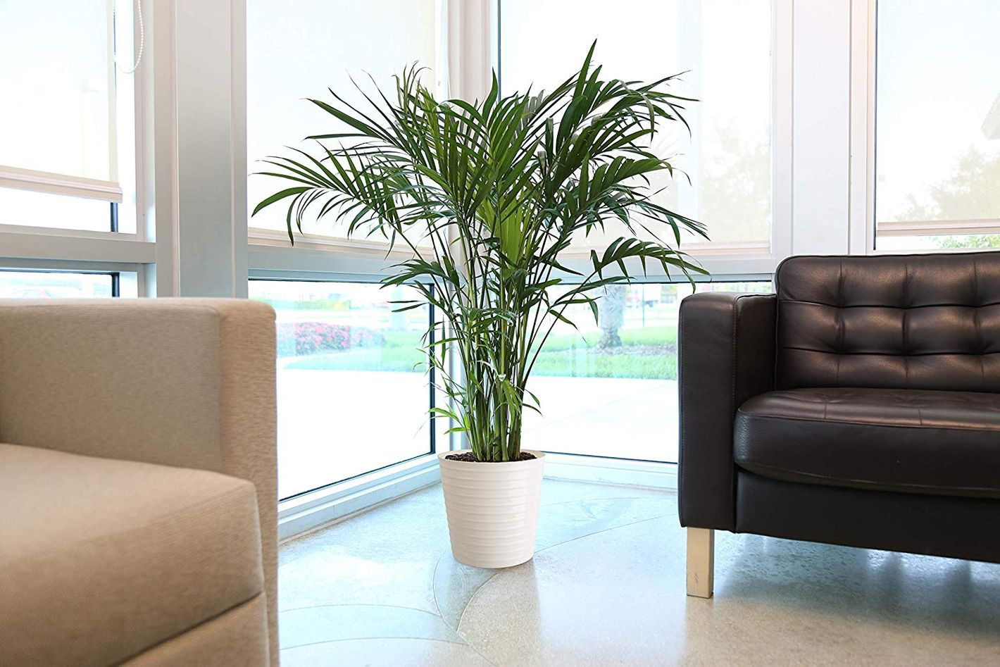 Costa Farms Neanthe Bella Parlor Palm, 14 to 16-Inches Tall, in White-Natural Lightweight Décor Planter