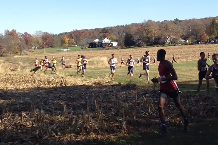 WATCH THIS; Deer crashes into cross-country runner during race