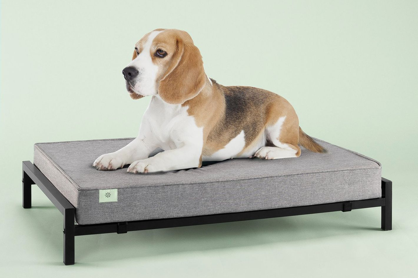 Zinus Elevated Pet Bed and 4-Inch Comfort Mattress Set (Medium)