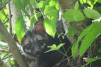 What a Relief: Authentication Method Developed for Civet-Poop Coffee