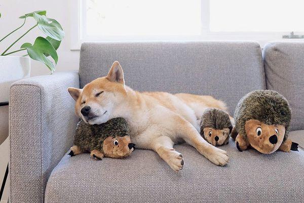 Outward Hound Hedgehogz Squeak and Grunt Plush Dog Toy