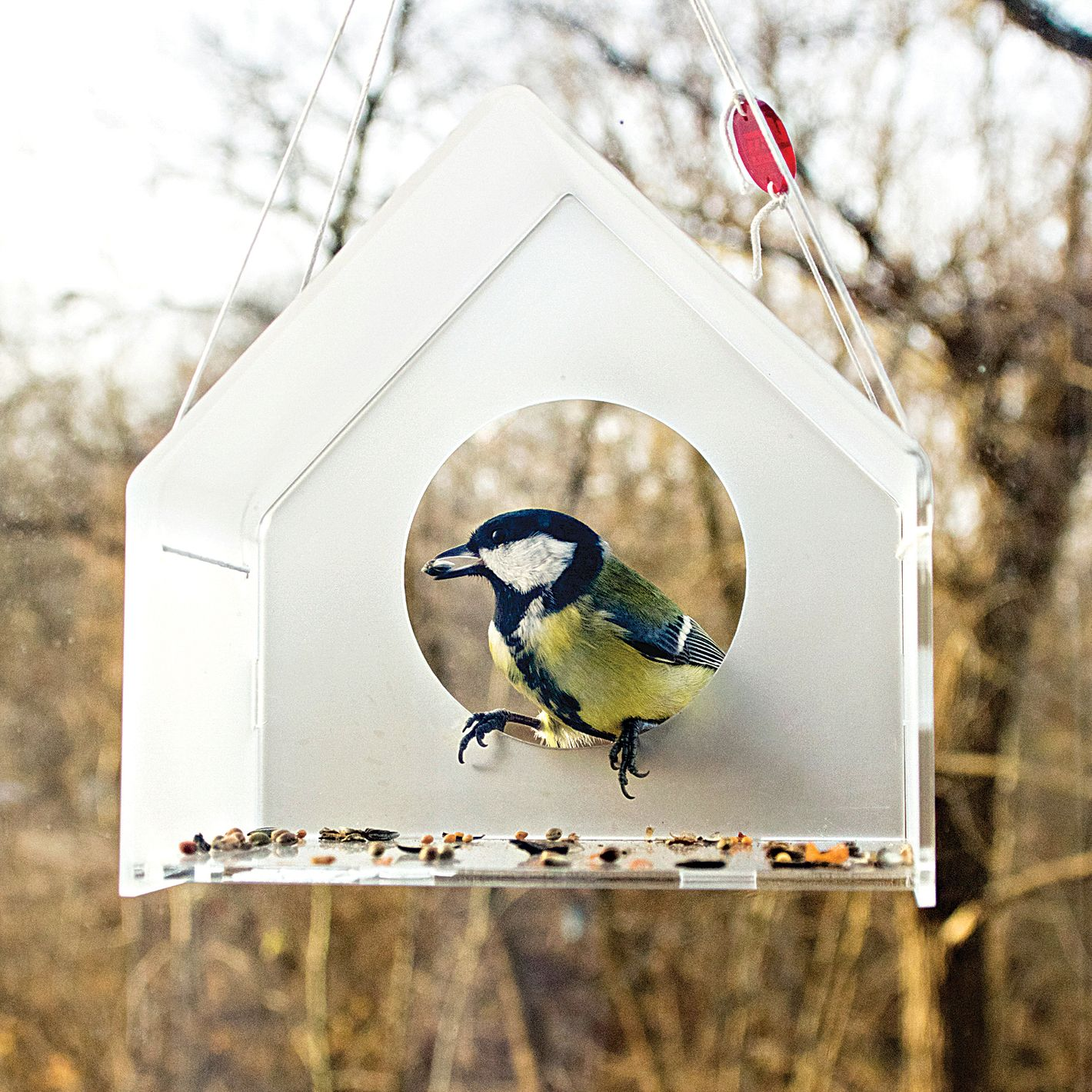 Modern Acrylic Bird Feeder by Uczarczyk