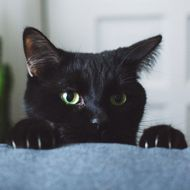 08 Mar 2014 --- Black cat in living room peeking over arm rest of sofa --- Image by ? bryantscannell/RooM The Agency/Corbis