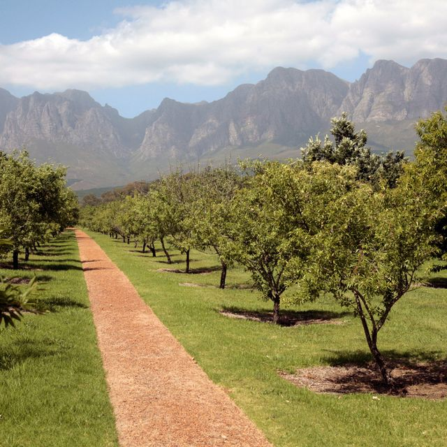 A Top Sommelier's Lowdown on the Western Cape Winelands