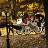 A carriage horse is viewed at Central Park on November 14, 2011 in New York City.