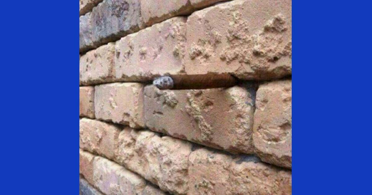 The Brick Wall Cigar Optical Illusion Blowing Up the Web