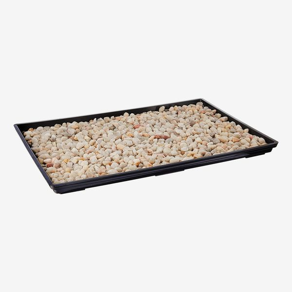 Brussel's 13-Inch Humidity Tray With Decorative Rocks
