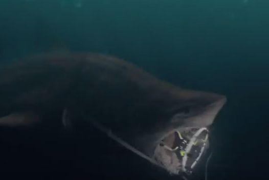 Fact-Checking The Meg