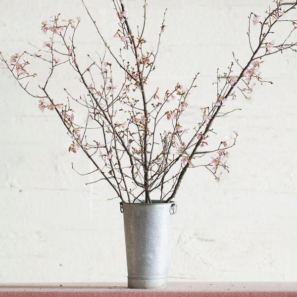 Terrain Seasonal Pink Blossom Branches