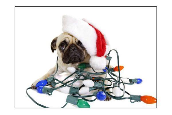 Pug Lights Holiday Card