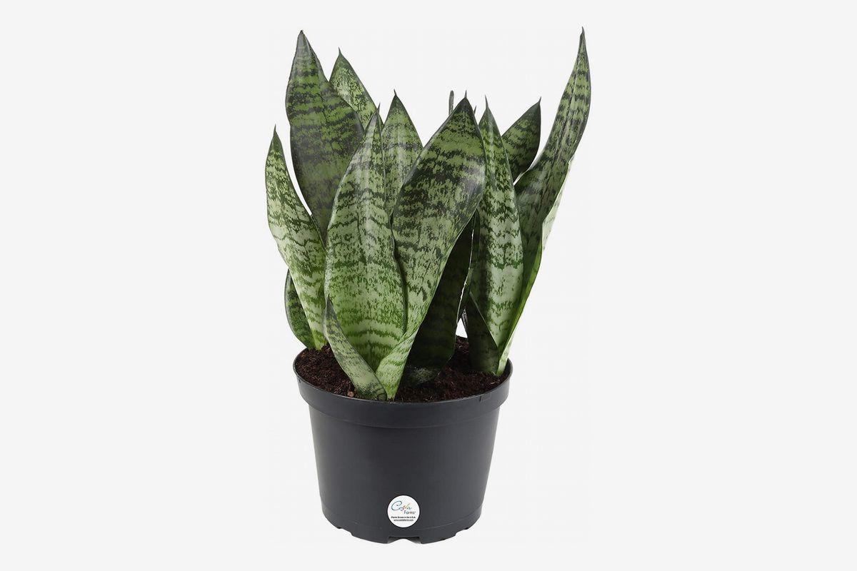 The 6 Best Plants For Cubicles According To Plant Experts The Strategist New York Magazine