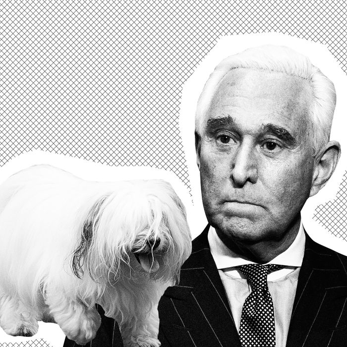 L: Bianca the dog, R: Roger Stone.
