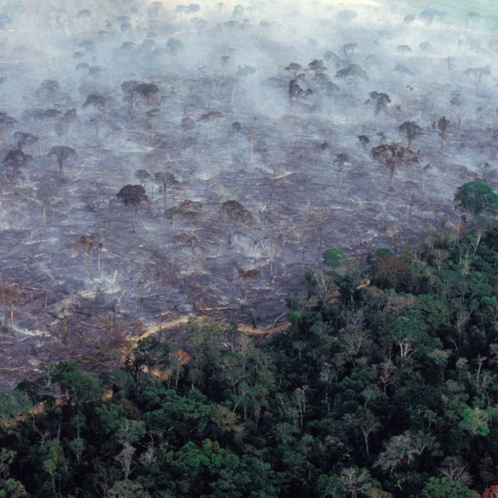 Aerial view of Amazon rainforest burning, farm management with deforestation.