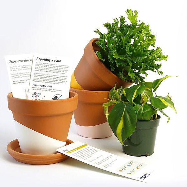 Horti Subscription Plants