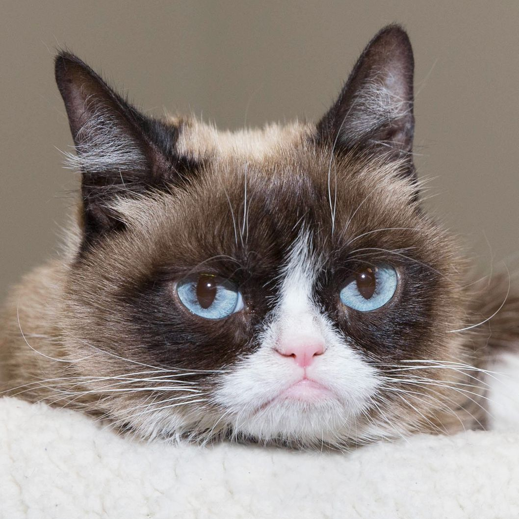 "Grumpy Cat to Join the Cast of ""Cats"""