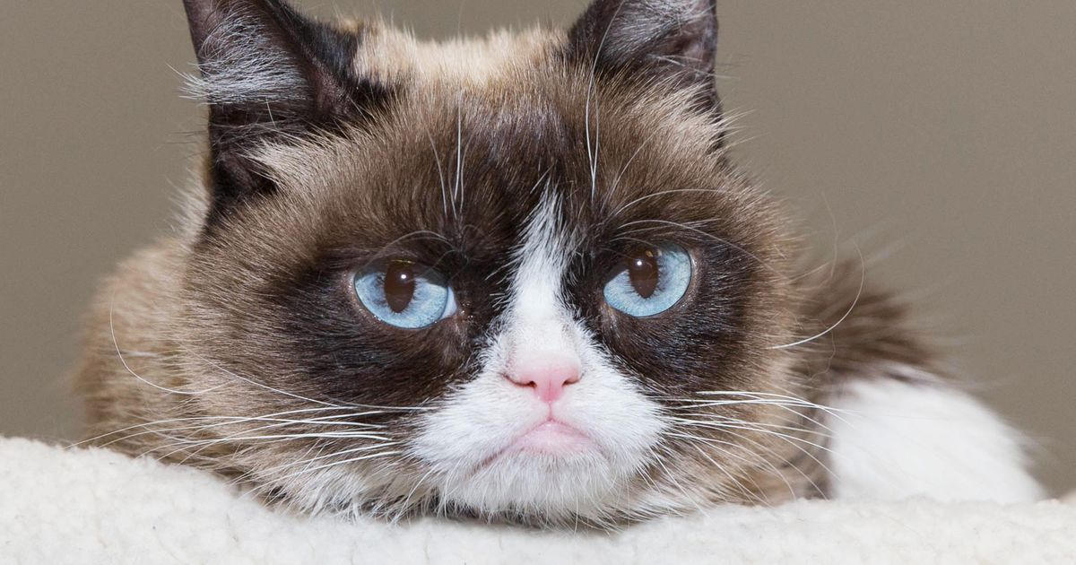 Grumpy Cat Is Joining ...