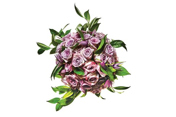 Purple Haze and Ocean Song roses, clematis, and camellia foliage