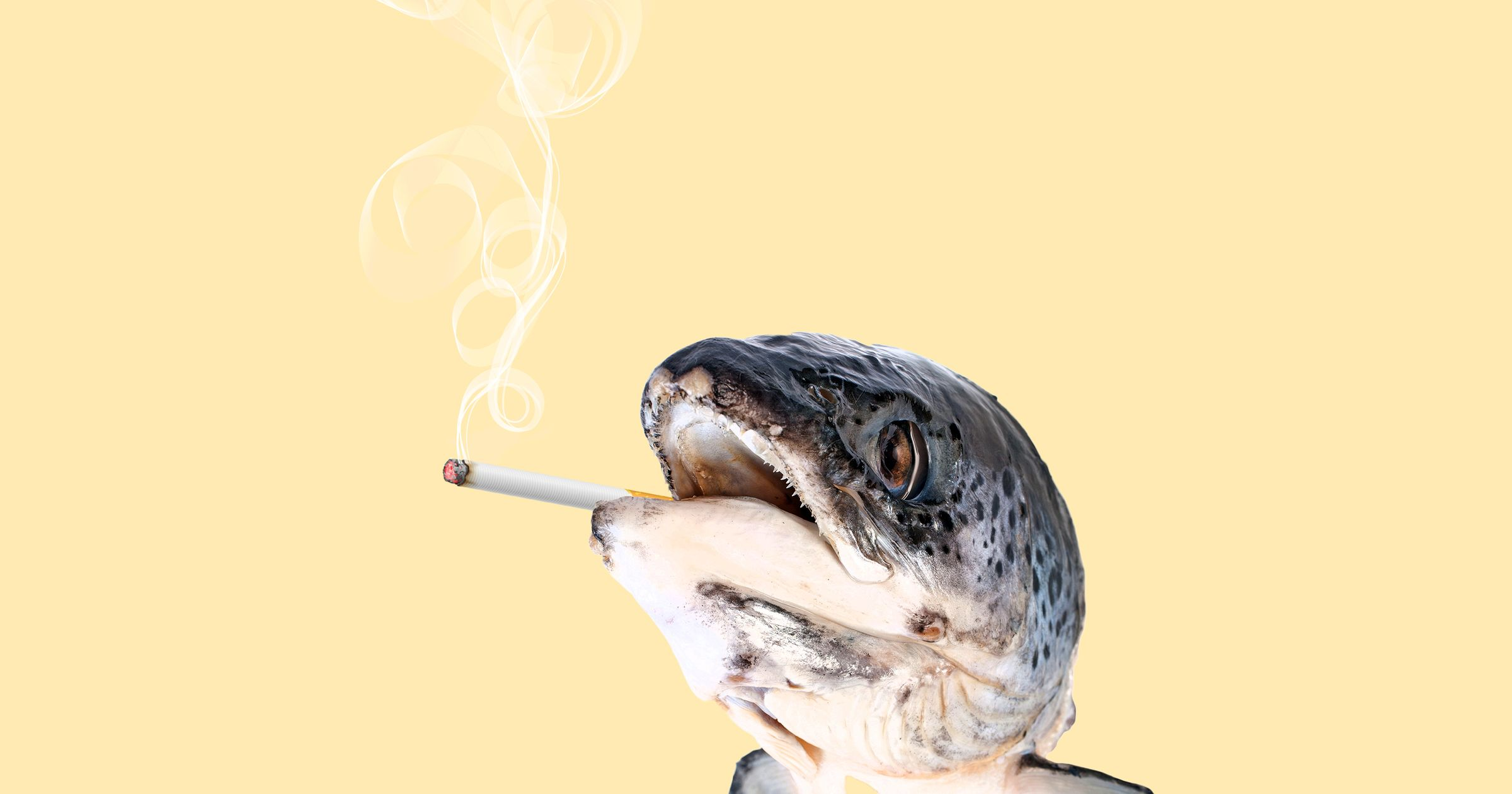 When Cigarettes Remind Smokers of Rotten Fish -- Science of Us: http://nymag.com/scienceofus/2014/11/when-cigarettes-remind-smokers-of-rotten-fish.html