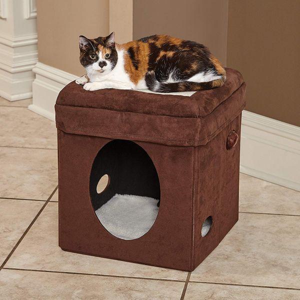 Cubo del gato curioso del medio oeste