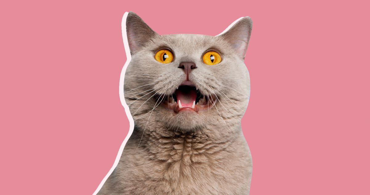 Did Hype Kill the 'Cat Person' Book?