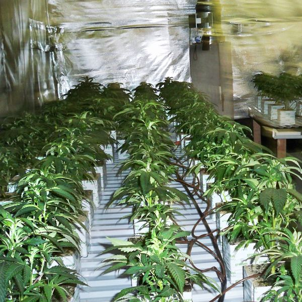 Pot Growers Have Realized They're Pretty Awesome at Growing Vegetables, Too