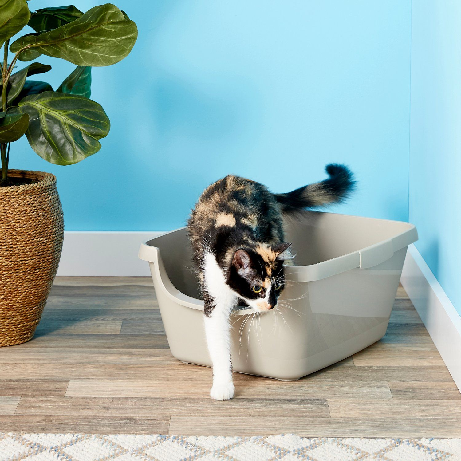 9 Best Litter Boxes For Cats 2019 The Strategist New York Magazine