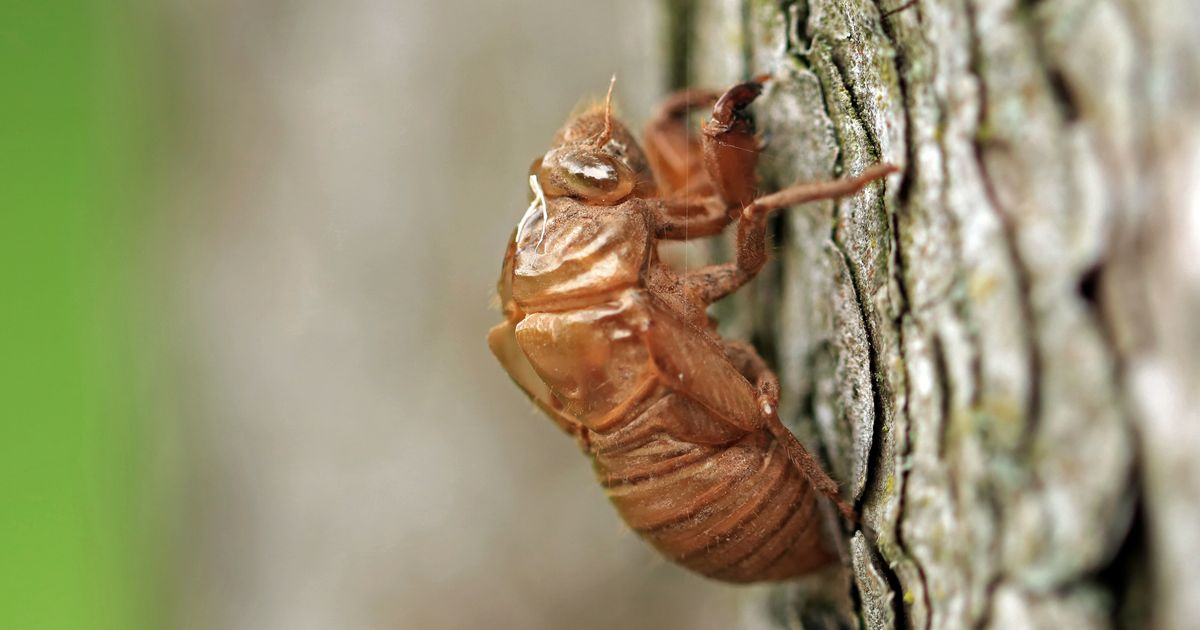 The Cicadas Are Here